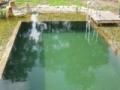 swimming ponds and natural swim ponds (1)