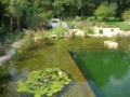 swimming ponds and natural swim ponds (3)