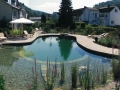 swimming ponds and natural swim ponds (6)
