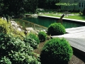 swimming ponds and natural swim ponds (8)