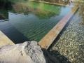 swimming ponds and natural swim ponds (9)