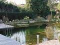 swimming ponds and natural swim ponds