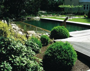 Natural swimming pond maintenance